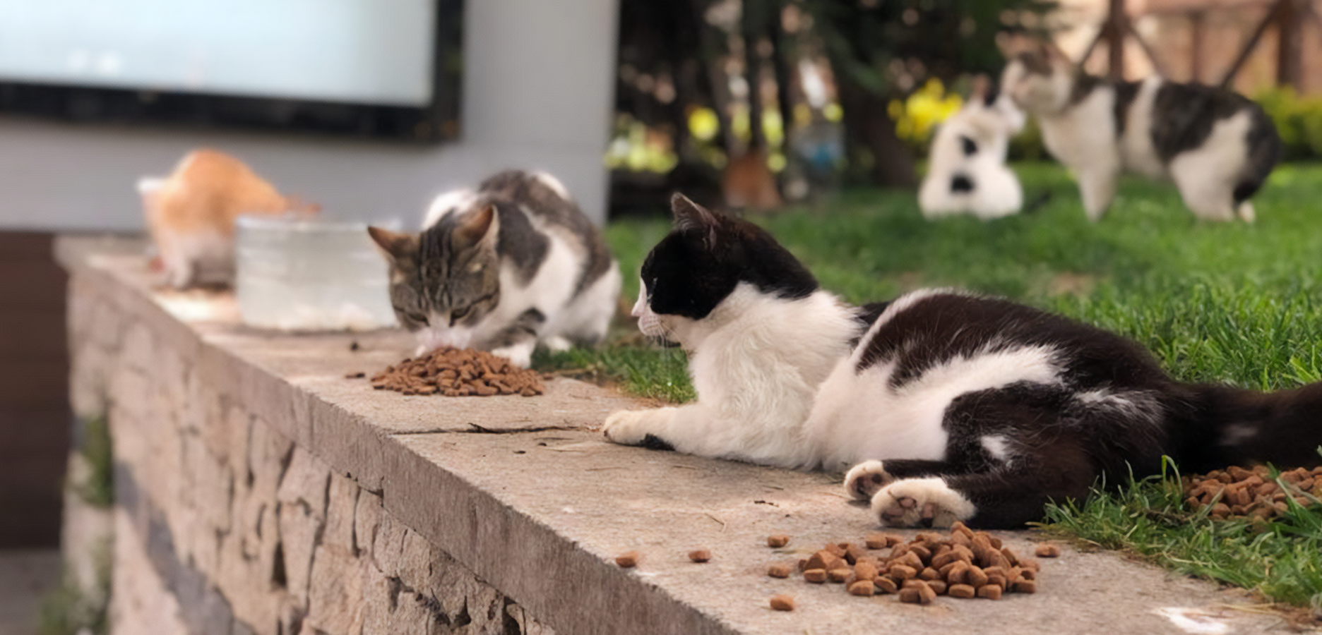 Food Aid To Stray Animals During Covid-19 Period